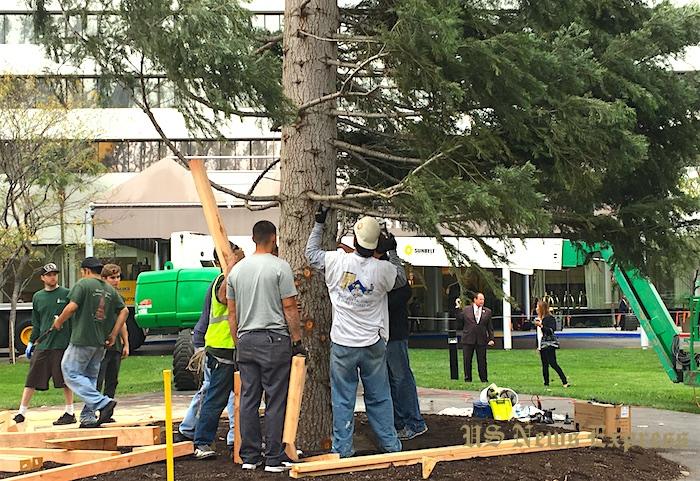 巨大的圣诞树需要一整个团队协作。庞可阳摄